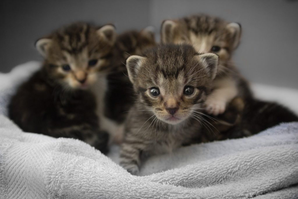 Spay Or Neuter to Avoid Unwanted Puppies or Kittens